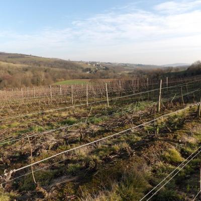 Taille de la vigne en cours ...